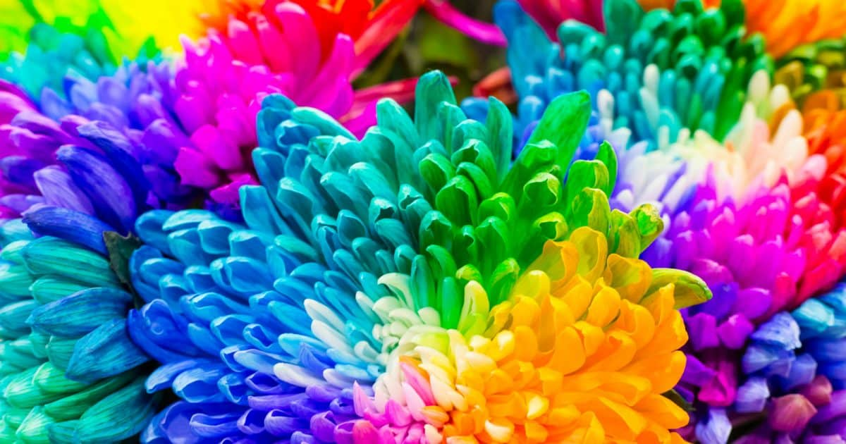 Be it blue and silver, black and red, or rainbow, this article will give you some ideas for your gay and lesbian wedding flowers</p></noscript><p><strong>Related: <a href=