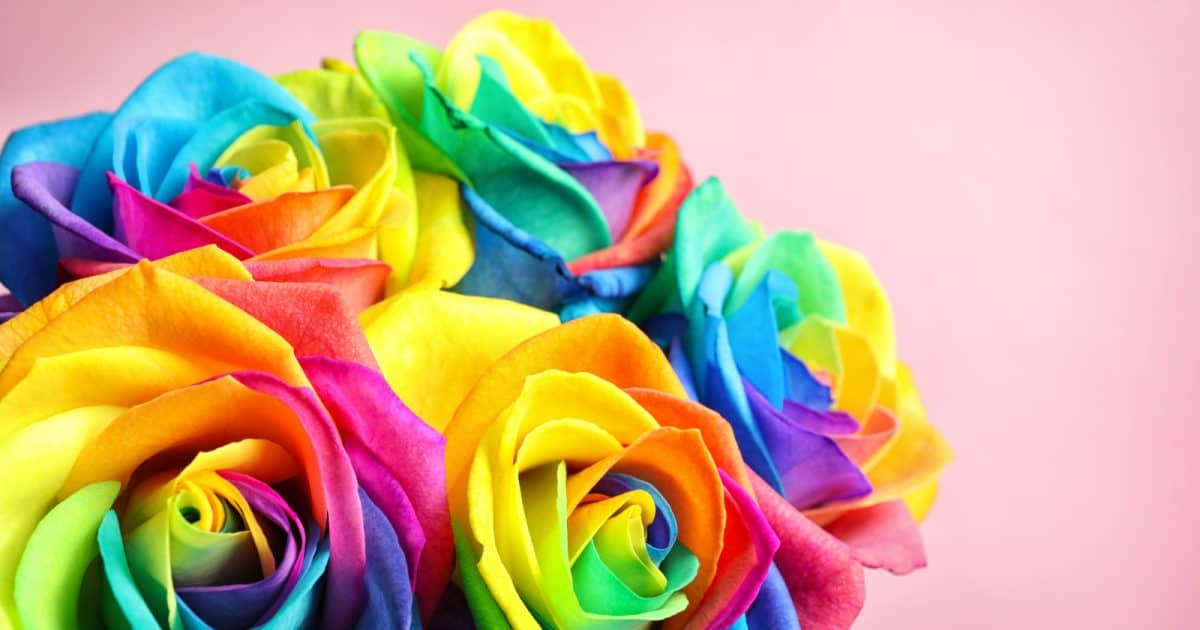 These rainbow roses make a beautiful throwing bouquet for your wedding.
