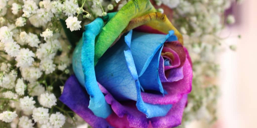 a rainbow rose makes a great gay wedding decor idea