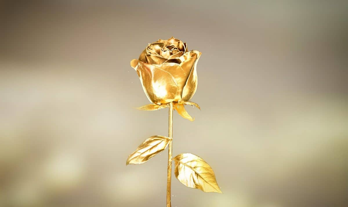 An illustrative image of a golden rose with a plain, blurry background.