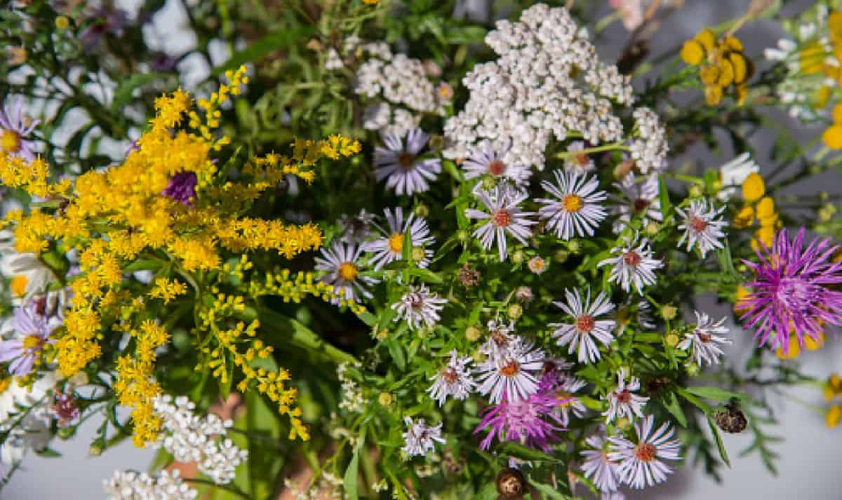 Bouquet of wildflowers - chamomile, clover, yarrow, tansy, thistle, aster, golden vin