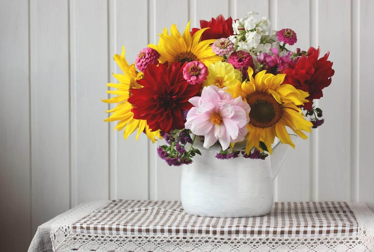 bouquet of garden sunflowers and dahlias. enameled teapot with flowers on the table. rustic still life.