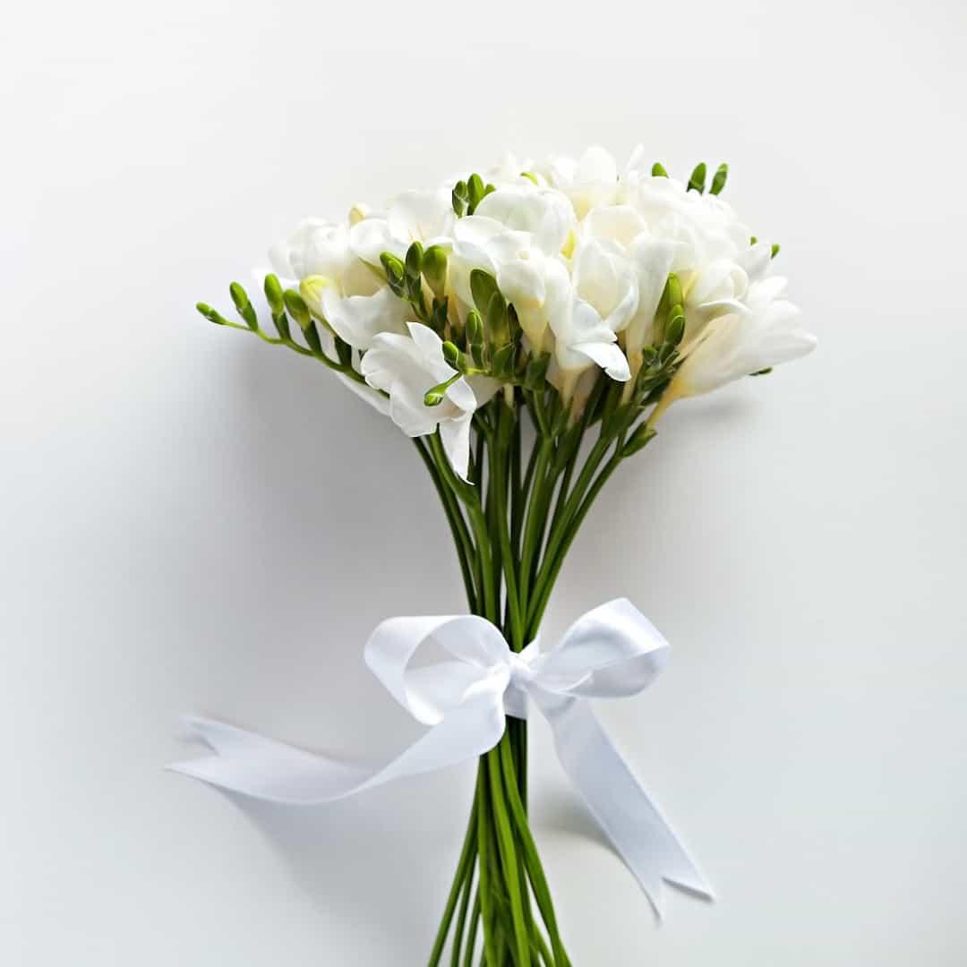 Freesia - white flowers;