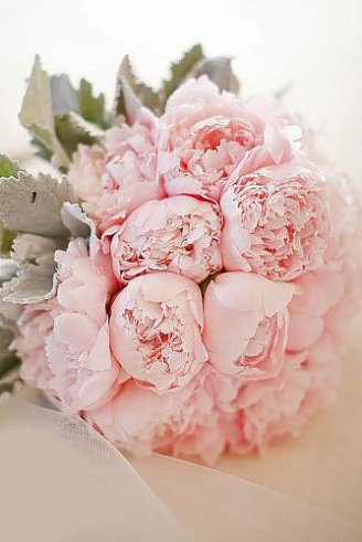 wedding bouquet made of large round pink flowers only
