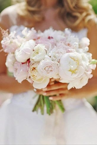 Peony - white and pink flowers