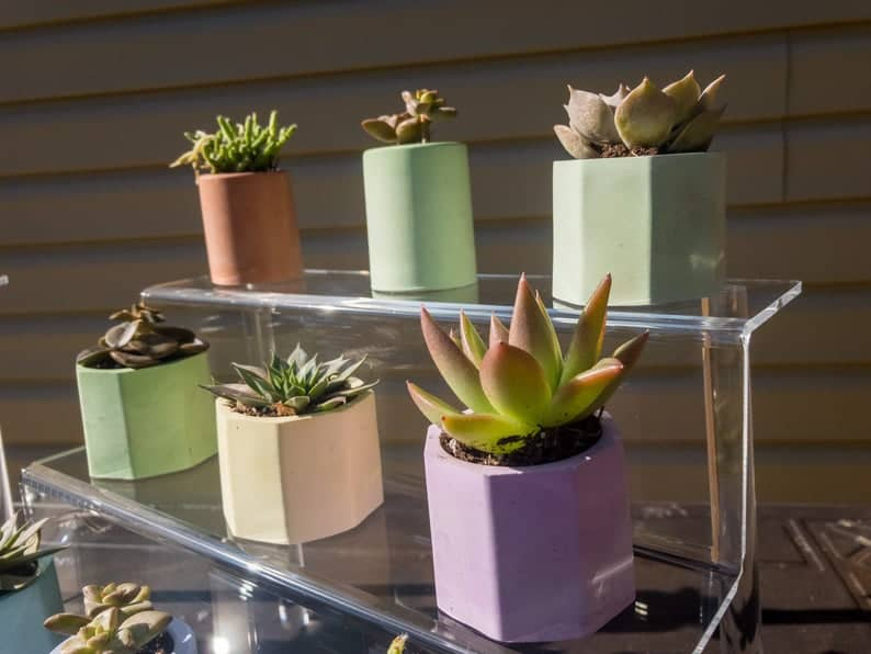 different types of succulent plants in pots