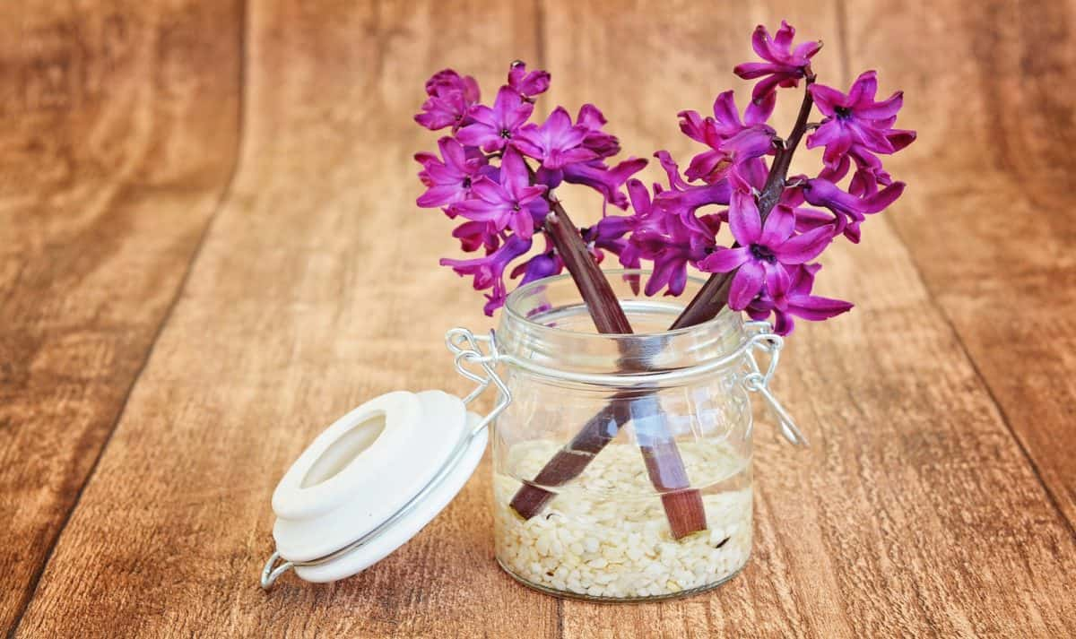 diy flower vase with fresh hyacinth flower as a housewarming gift for couple