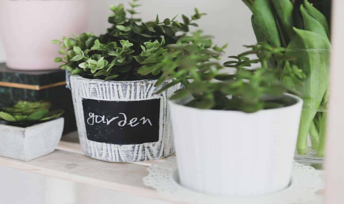 white and gray pots planted with cute plants