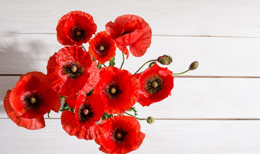 Bouquet of red poppies in glass vase on old white wooden table.top vie